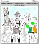 Toonsburgh cartoon of friends for life, two dogs (German Shepherd and Siberian Husky) and one Irish Boxer (a man).